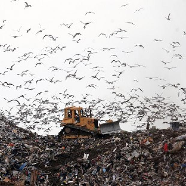 A new report urges the Government to ban all food leftovers from landfill by 2020