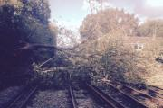 Fallen tree: Blocking the line at Hampton Court (Credit: South West Trains)