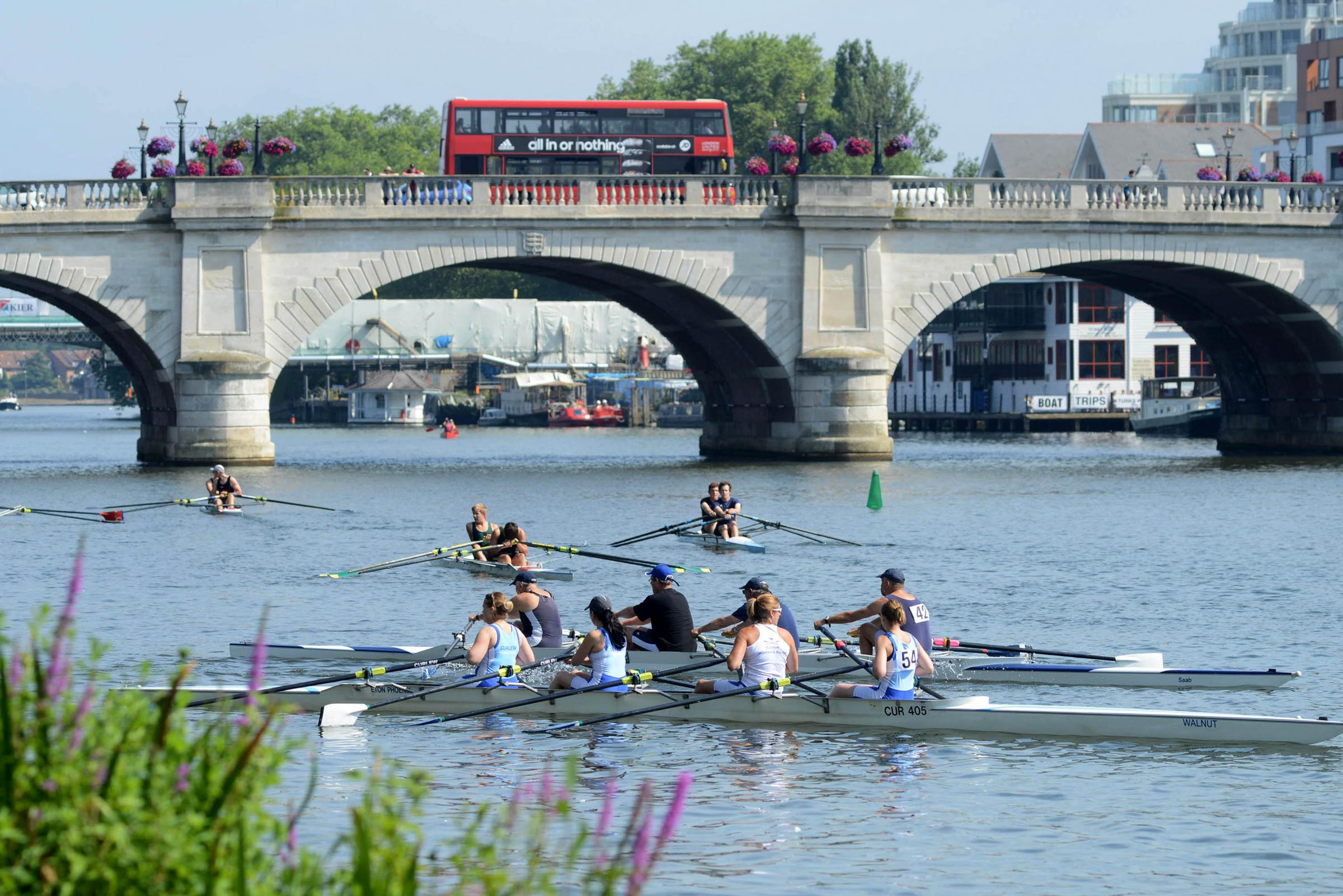 Kingston Guardian: Kingston Regatta, River Thames