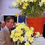 Kingston Guardian: The Prince of Wales has a fondness for daffodils